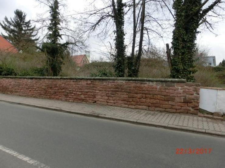 Riesiges Baustück in Großniedesheim - Grundstück kaufen - Bild 1