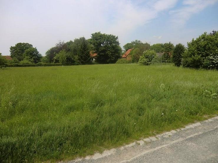 Bild 2: Ein sonnengeflutetes Grundstück - viele Möglichkeiten