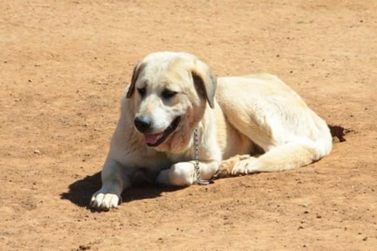 Bild 2: Diva, Tierschutzhund aus Spanien