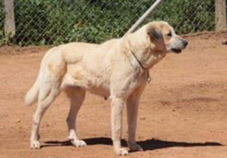 Bild 3: Diva, Tierschutzhund aus Spanien