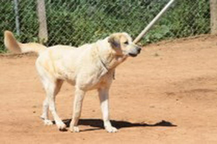 Bild 4: Diva, Tierschutzhund aus Spanien