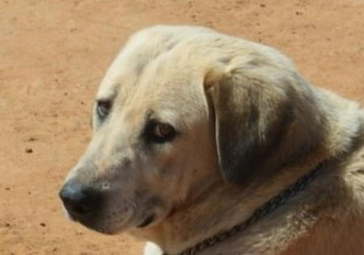 Diva, Tierschutzhund aus Spanien - Mischlingshunde - Bild 1