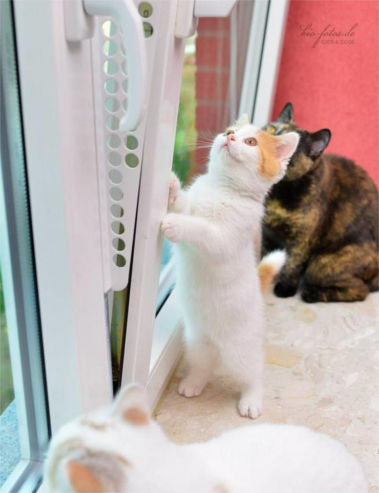 Bild 5: Kippfensterschutz, Fensterschutzgitter,