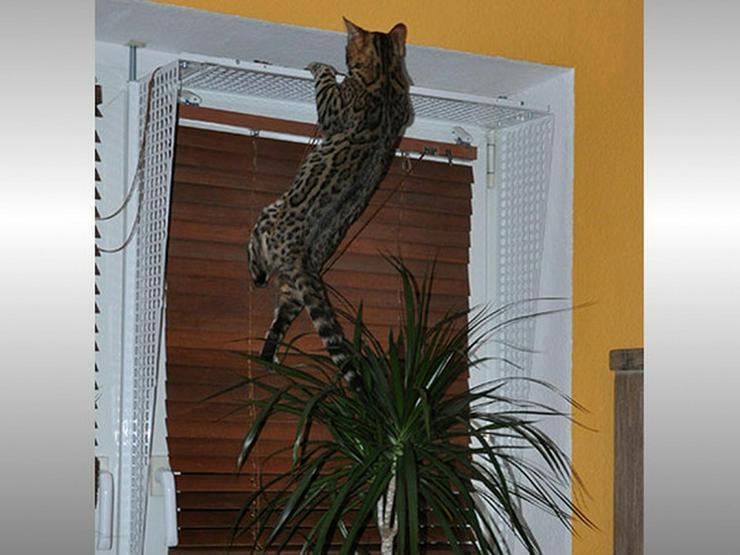 Bild 3: Kippfensterschutz, Fensterschutzgitter,