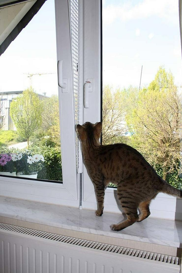 Bild 2: Kippfensterschutz, Fensterschutzgitter,