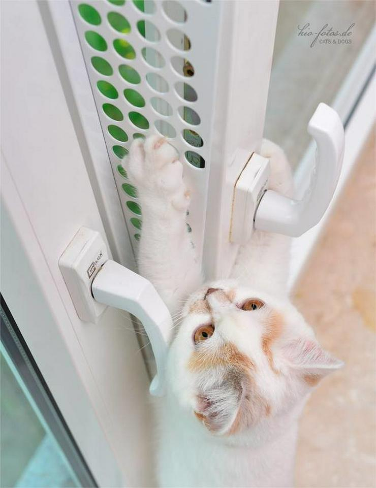 Bild 6: Kippfensterschutz, Fensterschutzgitter,