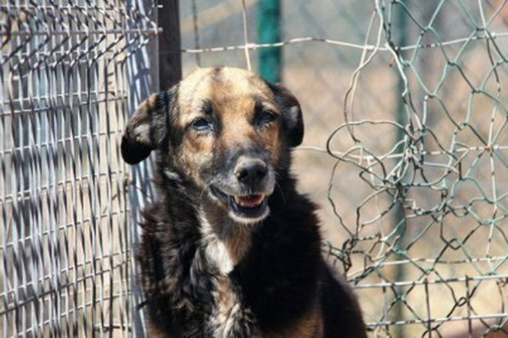 Dunia, Tierschutzhund aus Spanien - Mischlingshunde - Bild 1
