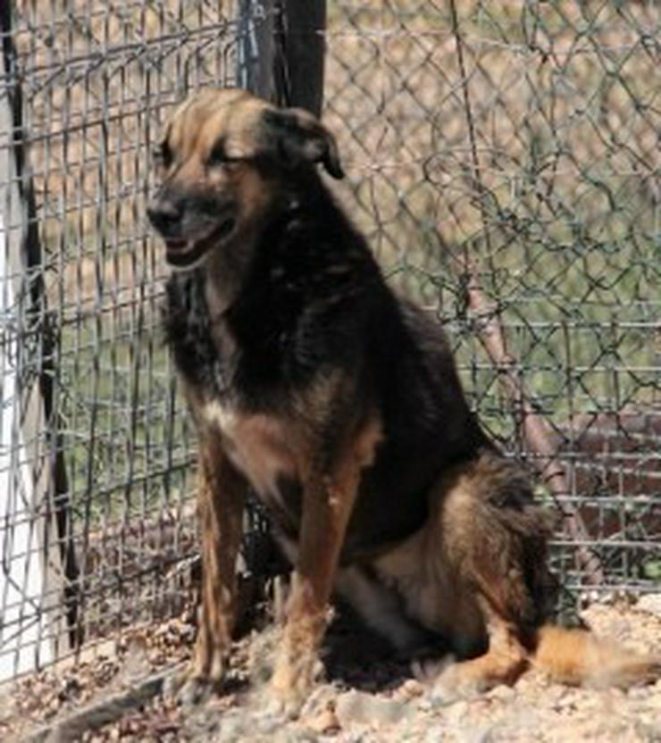 Bild 2: Dunia, Tierschutzhund aus Spanien