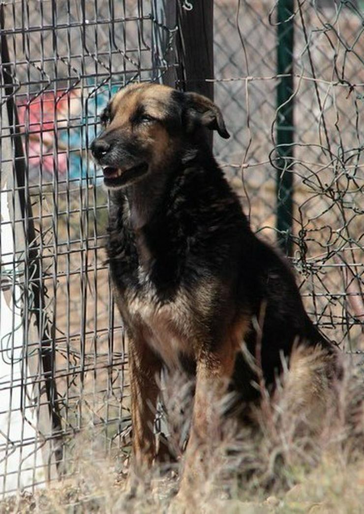 Bild 3: Dunia, Tierschutzhund aus Spanien