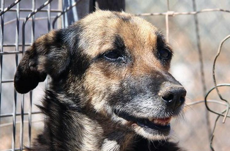 Bild 6: Dunia, Tierschutzhund aus Spanien