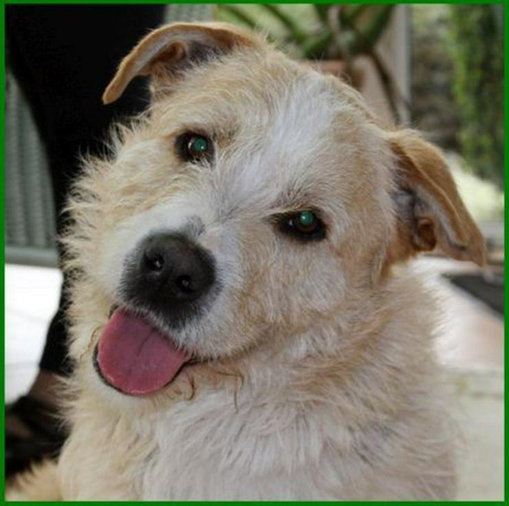 Pitt - Mischlingshunde - Bild 1