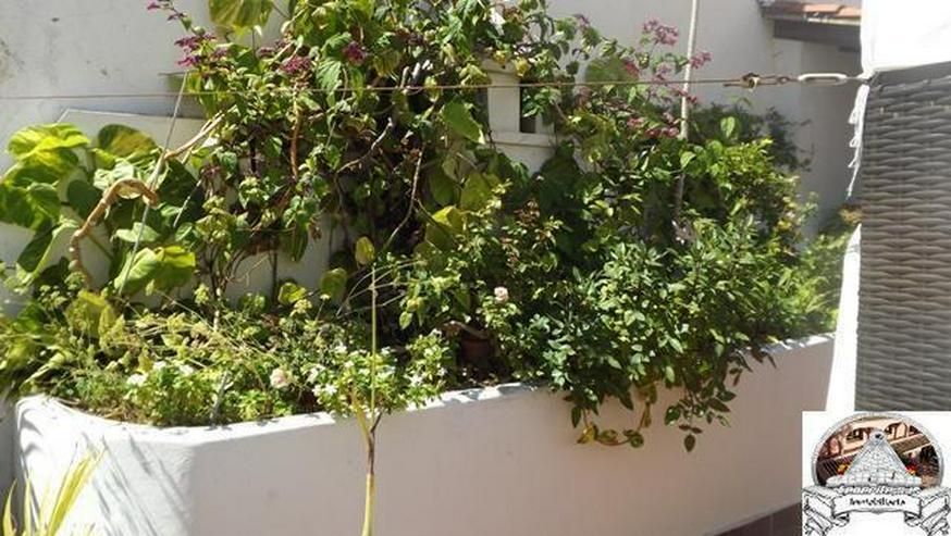 Bild 5: Zweigeschössige Etagenwohung in Puerto de la Cruz