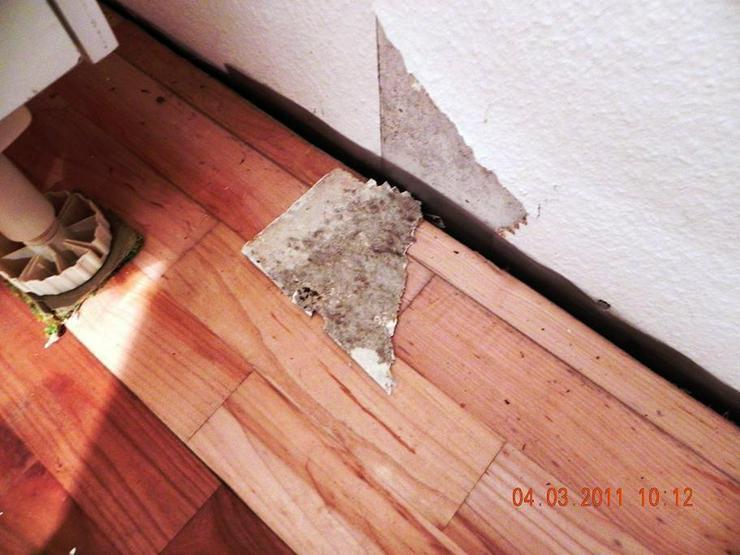 Bild 3: Schimmel im Haus ?