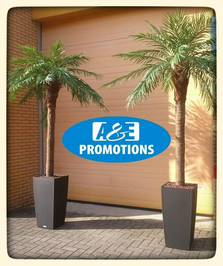 Bild 5: luxus palmen verleih 1001Nacht modulen mieten