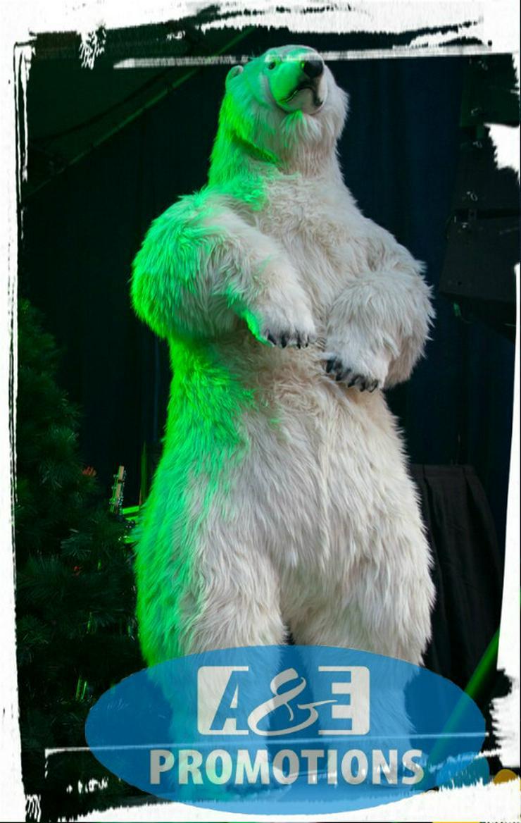 Bild 2: iglu verleih grosse eisbären pinguins mieten