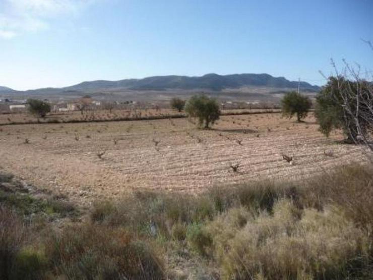 Land / Kauf - Grundstück kaufen - Bild 1
