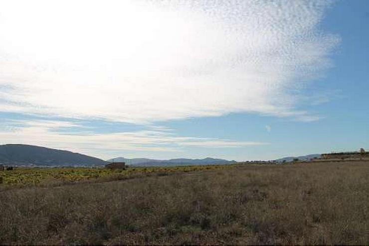 Bild 5: Bauland 5km von Pinoso