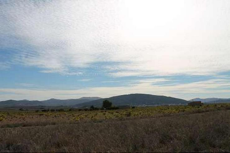 Bild 4: Bauland 5km von Pinoso