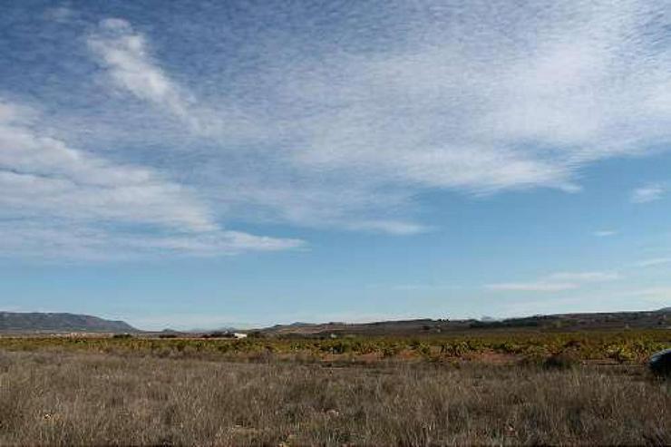 Bild 2: Bauland 5km von Pinoso