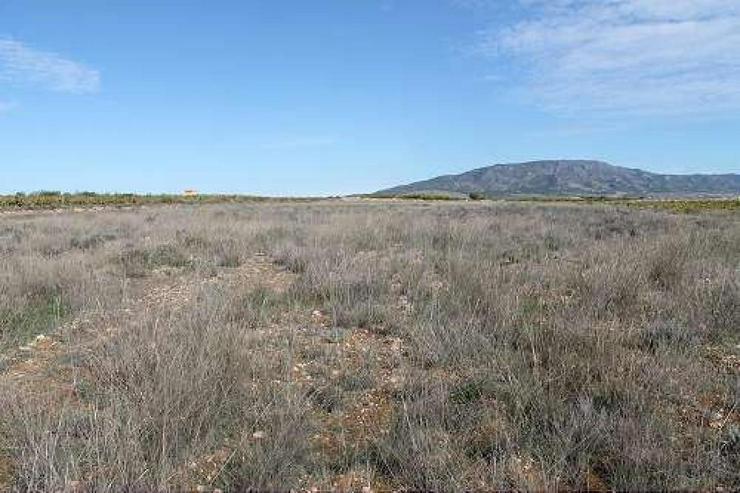 Bild 6: Bauland 5km von Pinoso