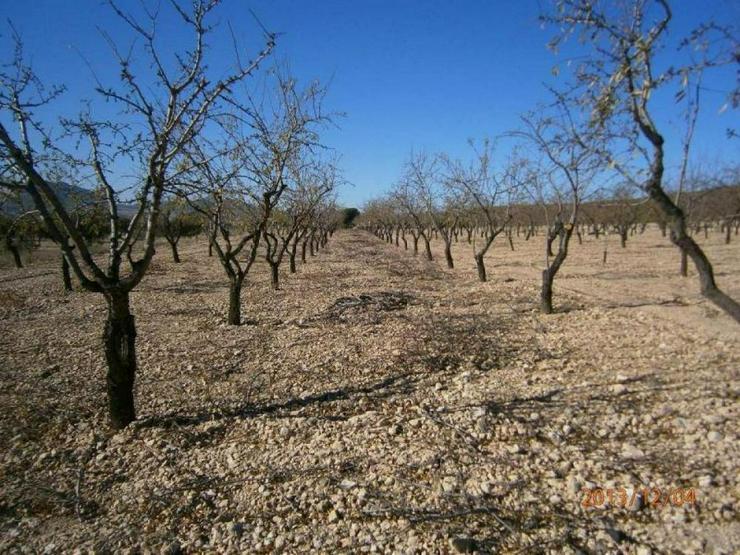 Bild 4: Bauland mit Mandelbäumen