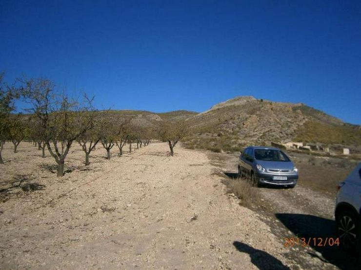 Bild 5: Bauland mit Mandelbäumen