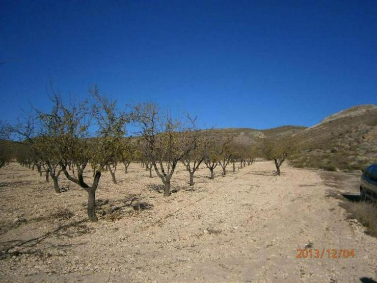 Bild 6: Bauland mit Mandelbäumen