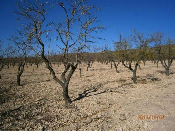 Bild 2: Bauland mit Mandelbäumen