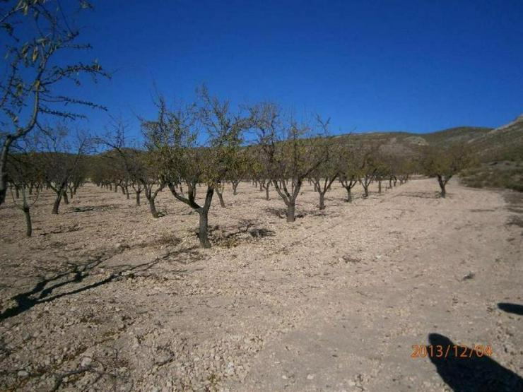 Bild 3: Bauland mit Mandelbäumen