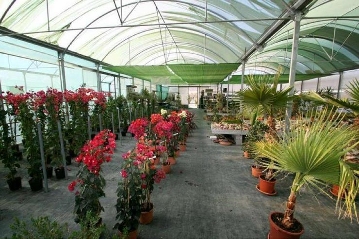 Bild 2: Gartencenter * mit Bauland für Wohnhaus