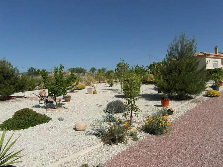 Bild 4: Herrliche Villa inmitten der Weingärten um Pinoso