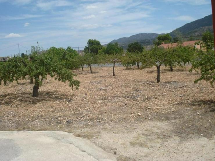 Bild 6: Mandelbäume umschließen dieses schöne Landhaus