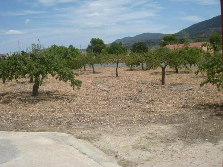 Bild 5: Mandelbäume umschließen dieses schöne Landhaus