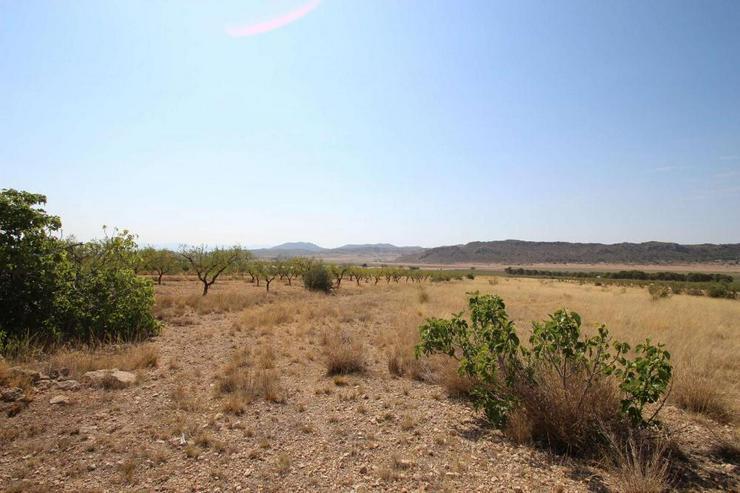 Bild 6: Bauland mit Ruine