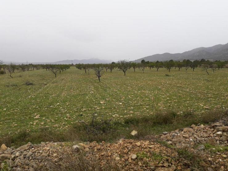 Bauland - Grundstück kaufen - Bild 1