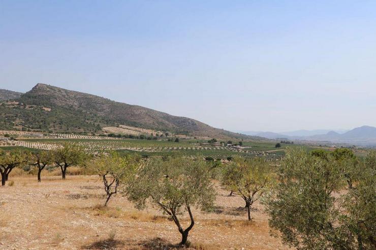 Bild 2: Blick auf Mandel- und Olivenbäume * Mietkauf möglich*