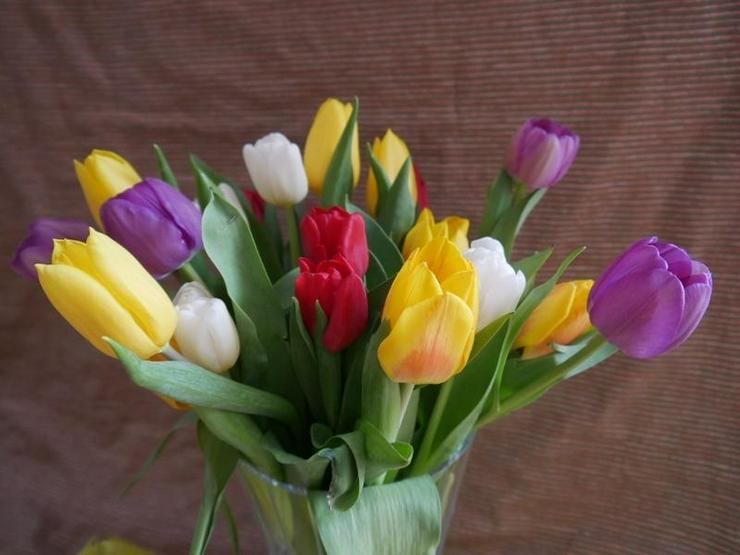 Frühling, frische Farben, Entscheidungen stehen JETZT an!! - von Schlapp Immobilien