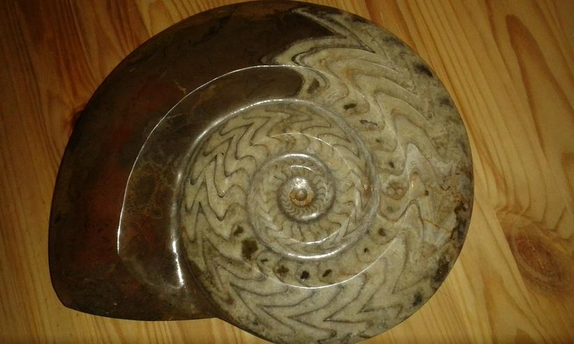 Schöner großer Ammonit 26 cm