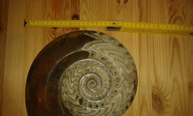 Bild 6: Schöner großer Ammonit 26 cm