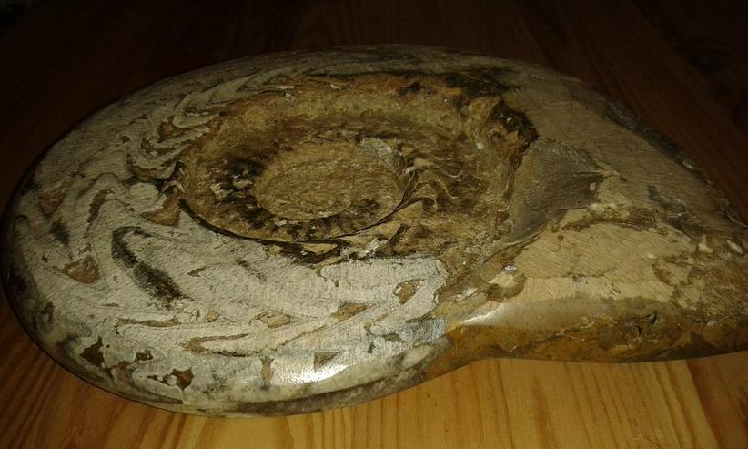 Bild 4: Schöner großer Ammonit 26 cm