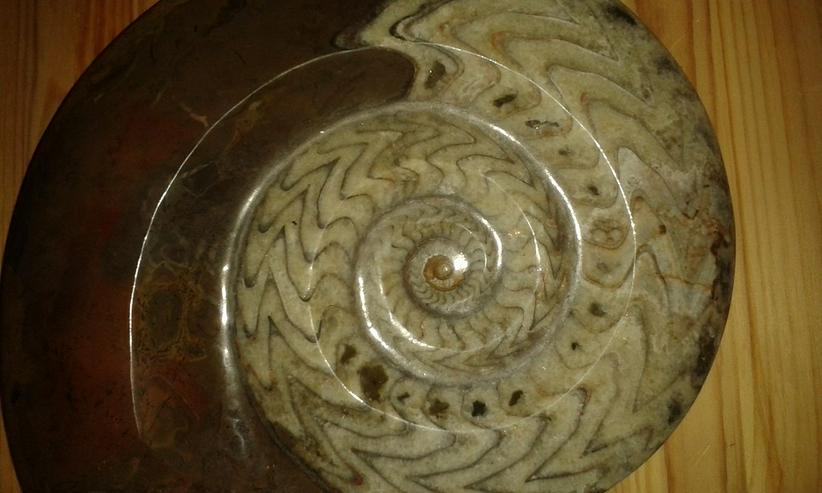 Bild 5: Schöner großer Ammonit 26 cm
