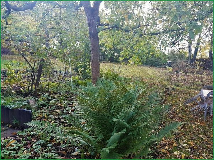 Bild 3: Wochenendgrundstück in Gera in absolut ruher Lage - mit Baumbestand und Streuobswiese.......