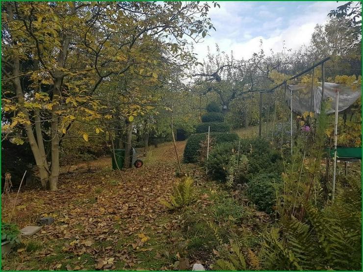 Bild 2: Wochenendgrundstück in Gera in absolut ruher Lage - mit Baumbestand und Streuobswiese.......