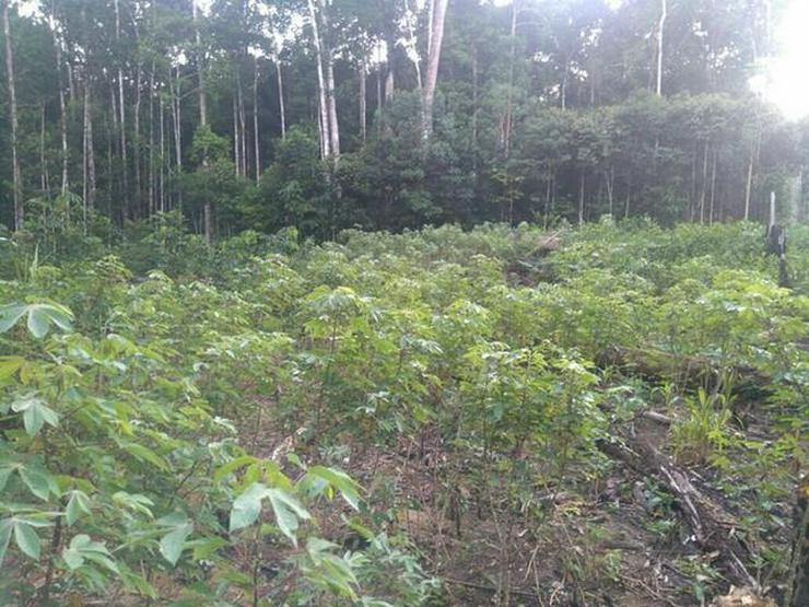 Brasilien Sito  50 HA Grundstück