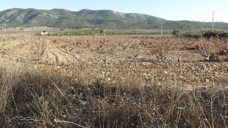 Grundstück in traumhaft ruhiger Lage - Grundstück kaufen - Bild 1