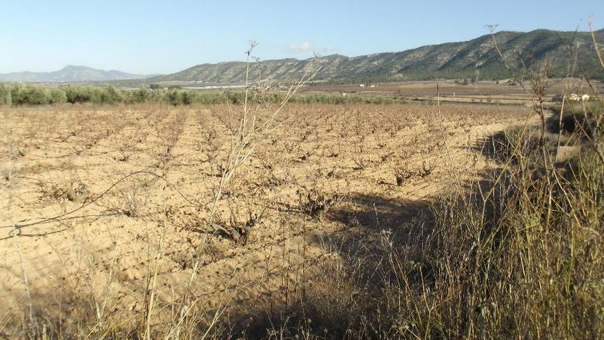 Bild 4: Grundstück in traumhaft ruhiger Lage