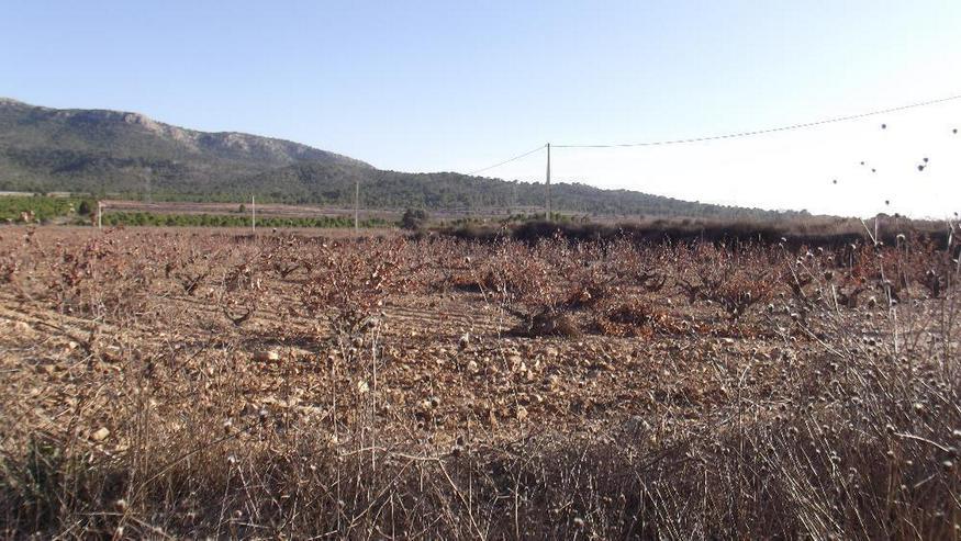 Bild 2: Grundstück in traumhaft ruhiger Lage