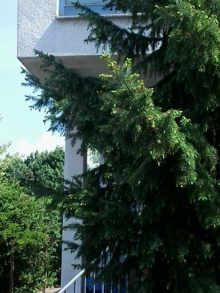 1-Zimmer Wohnung 30419 Hannover Nordstadt