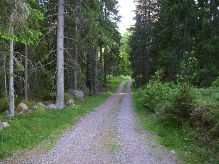 Bild 6: Schweden ,Ferienhaus m. Sauna, Boot, Angelrecht