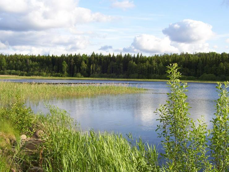 Bild 4: Schweden ,Ferienhaus m. Sauna, Boot, Angelrecht